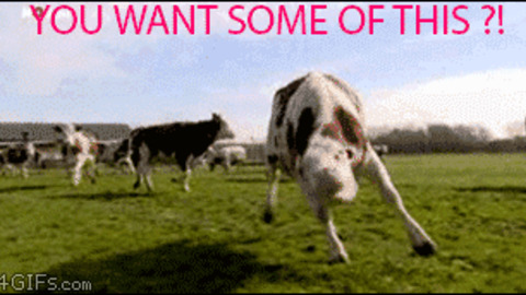 Mad cow GIFs - Get the best GIF on GIPHY