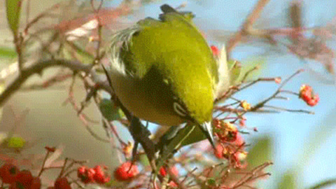 Japanese white eye GIFs - Get the best GIF on GIPHY